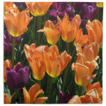 Tulipanes anaranjados y púrpuras