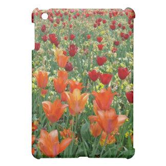 Tulipanes anaranjados y rojos