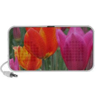 Tulipanes anaranjados y rosados altavoz