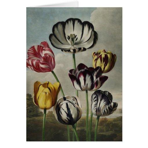 Tulipanes antiguos de los botanicals en notecards tarjeta