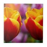 Tulipanes Azulejo