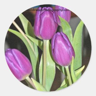 tulipanes azules, davidreadphotography.com etiqueta redonda