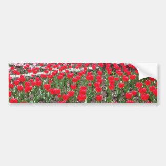 Tulipanes blancos, flores del panorama pegatina de parachoque