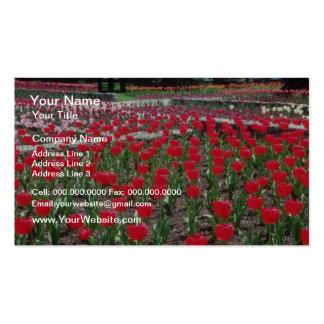 Tulipanes blancos, flores del panorama plantilla de tarjeta de visita