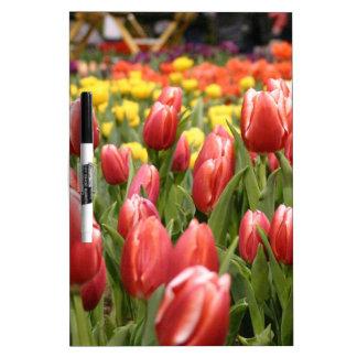 Tulipanes blancos rojos pizarras blancas