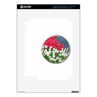 Tulipanes blancos rojos y jacintos de uva azules pegatina skin para iPad 3