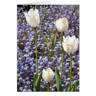 Tulipanes blancos tarjeta