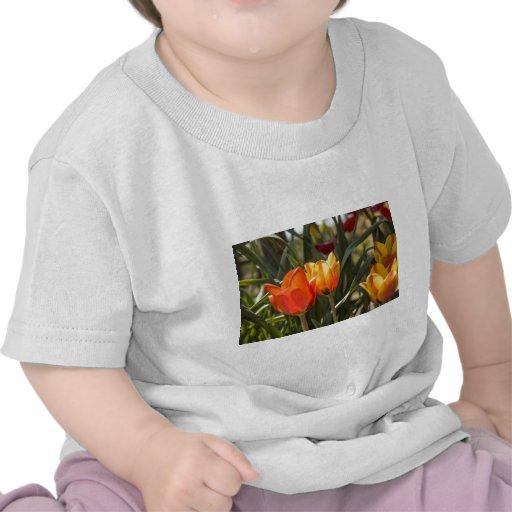 Tulipanes Camisetas