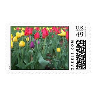 Tulipanes clasificados sellos
