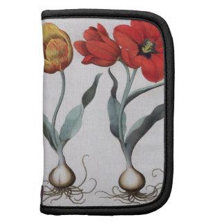 Tulipanes colore del cinnabrio del serotina del g organizador