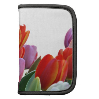 Tulipanes coloridos de la primavera organizadores
