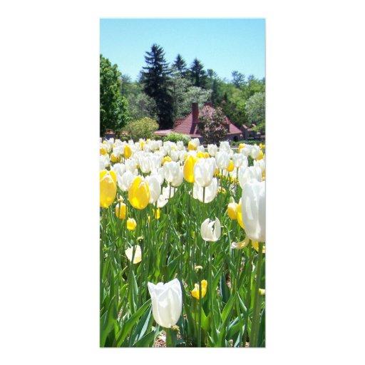 Tulipanes de Biltmore Tarjeta Personal
