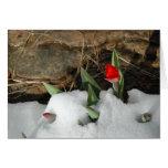 Tulipanes de Colorado Tarjeta