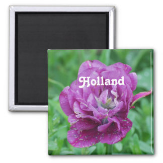 Tulipanes de Holanda Iman De Frigorífico