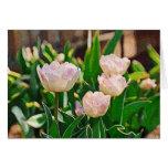 Tulipanes de la hierbabuena (Impasto) Tarjetas