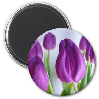 Tulipanes de la lavanda imán redondo 5 cm