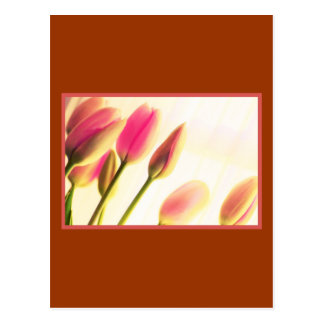 Tulipanes de la luz suave, fotografía floral, plan tarjeta postal