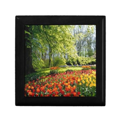 Tulipanes de la primavera cajas de regalo