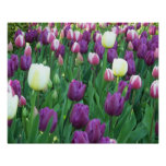 Tulipanes de la primavera florales impresiones