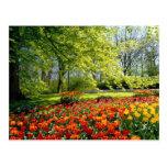Tulipanes de la primavera postal