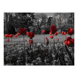 Tulipanes de la primavera roja impresiones