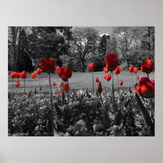 Tulipanes de la primavera roja póster