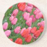Tulipanes de la primavera rosada y roja posavasos diseño