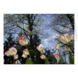 Tulipanes de la primavera tarjeta
