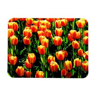 Tulipanes de la sol iman flexible