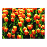 Tulipanes de la sol invitación 12,7 x 17,8 cm