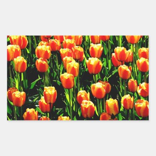 Tulipanes de la sol pegatina rectangular