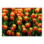 Tulipanes de la sol tarjeta pequeña