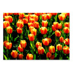Tulipanes de la sol tarjetas de visita grandes