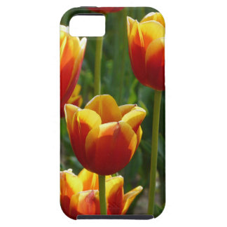 tulipanes de oro iPhone 5 funda
