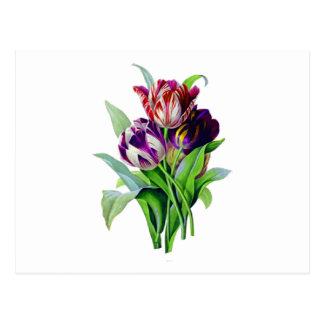 Tulipanes de Pedro José Redoute Postal