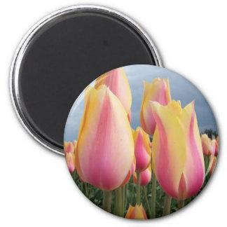 Tulipanes de ruborización de la belleza imán redondo 5 cm