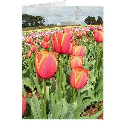 Tulipanes de Tasmania, Australia Tarjetas