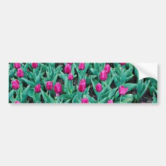 Tulipanes de Triumph, flores de las rosas fuertes Pegatina De Parachoque