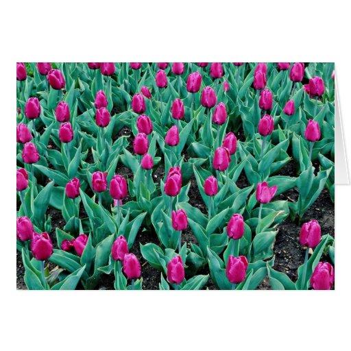 Tulipanes de Triumph, flores de las rosas fuertes Tarjeta De Felicitación