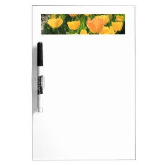Tulipanes del amarillo anaranjado por pizarras blancas