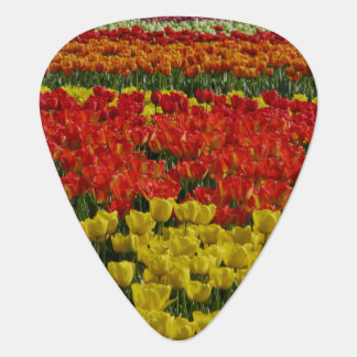 Tulipanes del arco iris de la sol púa de guitarra