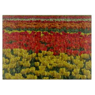 Tulipanes del arco iris de la sol tabla de cortar