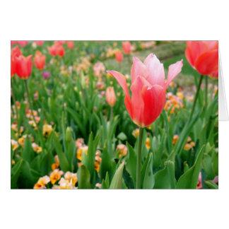 Tulipanes del día de madre felicitaciones