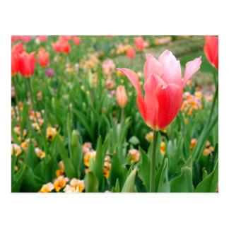 Tulipanes del día de madre postal