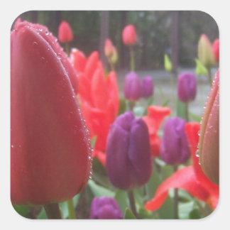Tulipanes del día lluvioso pegatina cuadrada