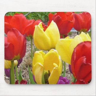 Tulipanes del jardín botánico alfombrilla de raton