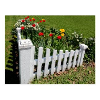 Tulipanes del jardín con la postal blanca de la