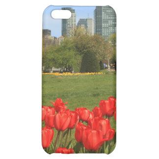 Tulipanes del jardín público de Boston