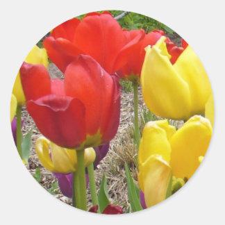 Tulipanes del pegatina del verano