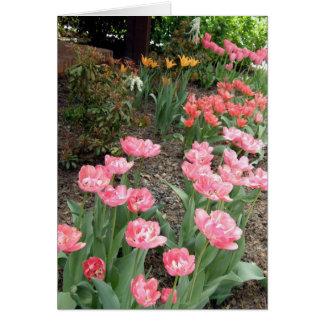 Tulipanes del rosa coralinos y amarillos tarjetón